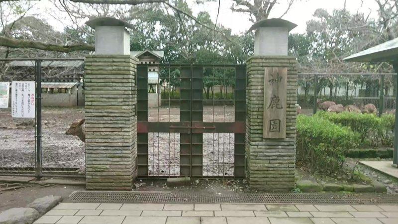 三嶋大社の神鹿園