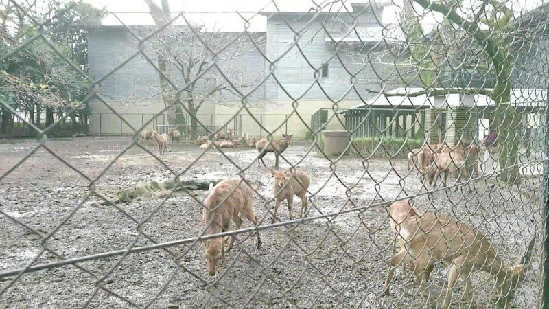三嶋大社の神鹿園にいる鹿2